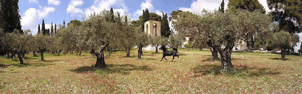 0072 Olive Mountain Greek